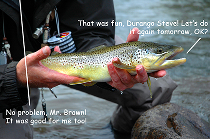 Click image for larger version  Name:brown copy.jpg Views:105 Size:173.3 KB ID:617