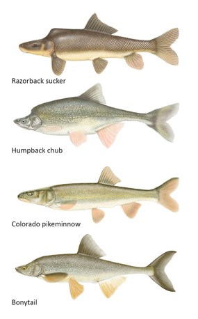 Click image for larger version  Name:endangered-fish-sm.jpg Views:60 Size:22.7 KB ID:33983