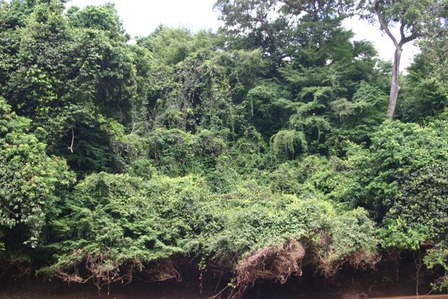 Click image for larger version  Name:Omo_2006_jungle.jpg Views:80 Size:100.2 KB ID:11183
