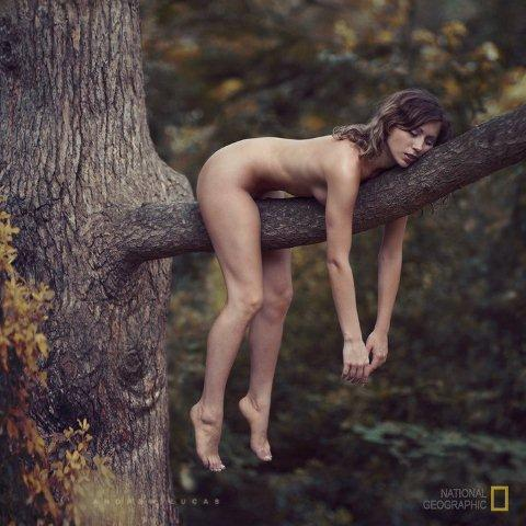 Click image for larger version  Name:Treed Cougar.jpg Views:167 Size:44.8 KB ID:32301
